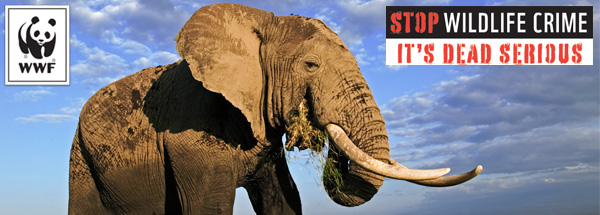 Help Stop Wildlife Crime