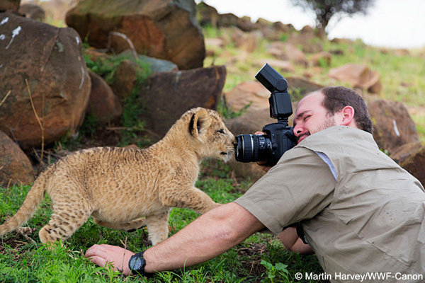 man photographing and young lion