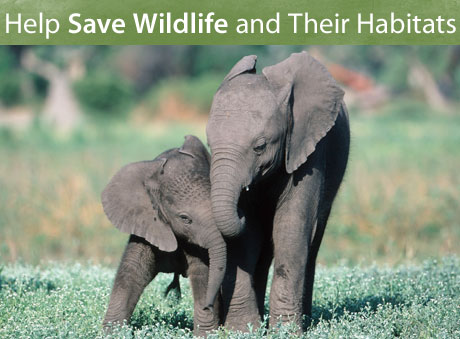 Symbolically Adopt An Elephant With A Monthly Gift World Wildlife Fund