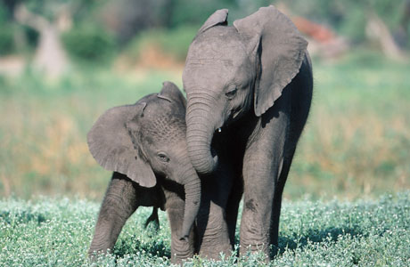 world wildlife foundation Volunteer, donate, read reviews for world wildlife fund, inc in washington, dc plus similar nonprofits and charities related to animals, environment, natural resources conservation & protection, wildlife preservation & protection.