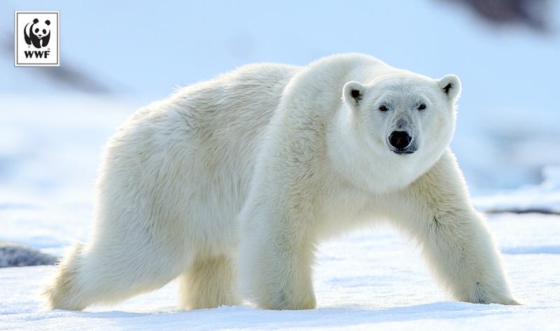 Give to World Wildlife Fund