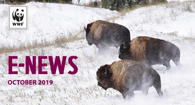 Bison released in Badlands National Park - October 2019 e-newsletter