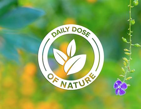 daily dose of nature symbol among greenery