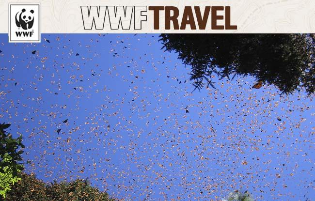 Monarch Butterfly Swarm - WWF Travel E-newsletter
