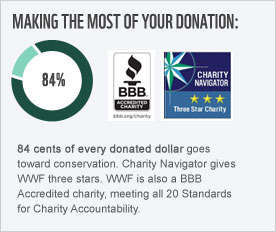 84 cents of every donated dollar goes toward conservation. Charity Navigator gives WWF three stars. WWF is also a BBB Accredited charity, meeting all 20 Standards for Charity Accountability.