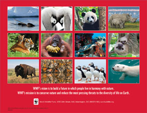 animal photos on back of calendar