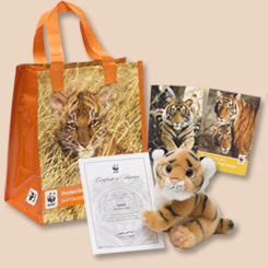 Tiger Adoption Gift