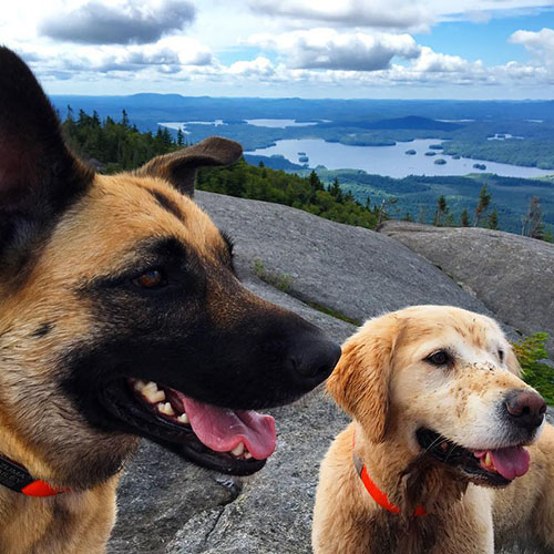Two dogs looking at horizon from Ampersand Mountain