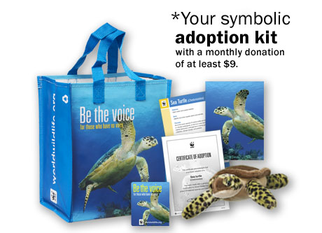 Make A Monthly Gift For Sea Turtles Other Species World Wildlife