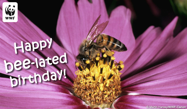 Birthday Ecard bee-lated