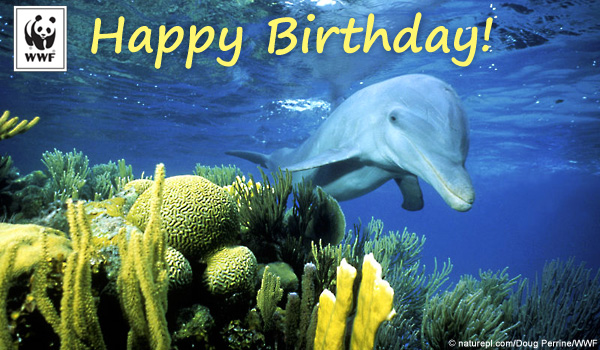 Birthday Ecard Dolphin Splash