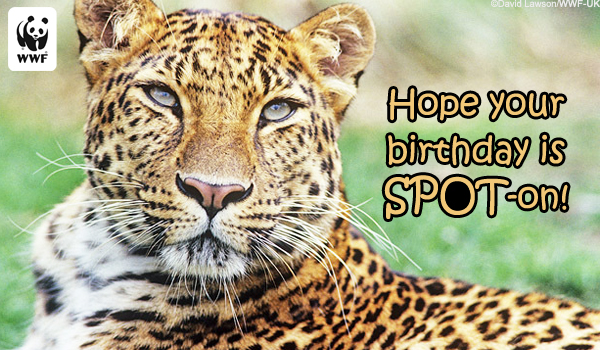 Birthday Ecard Spot On Leopard