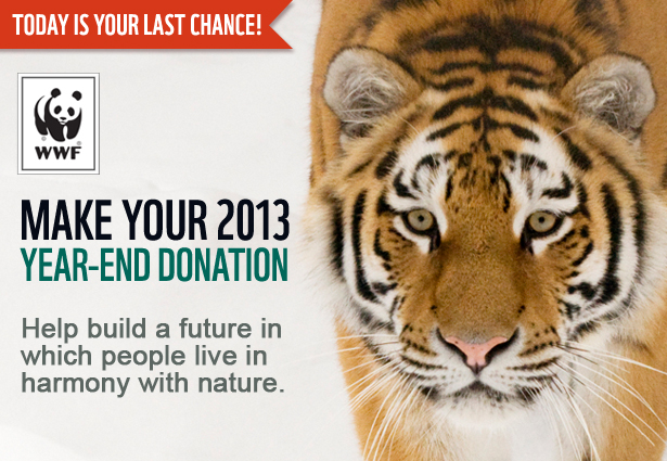 Today Is Your Last Chance! Make your 2013 year-end donation
