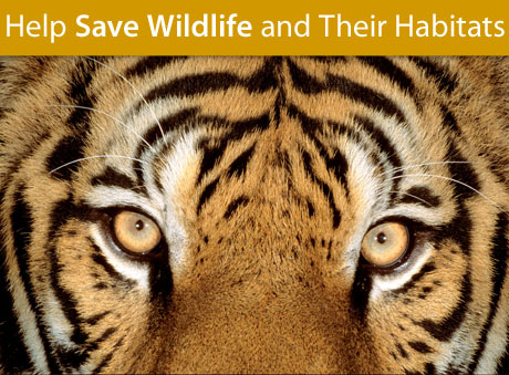 Help Save Wildlife and Their Habitats