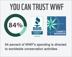 You can trust WWF. 84 cents of every donated dollar goes toward conservation.