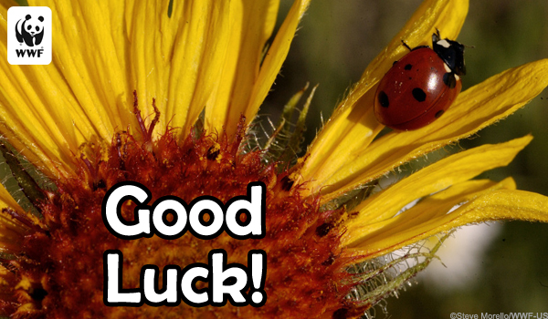 Occasion Ecard Good Luck Bug