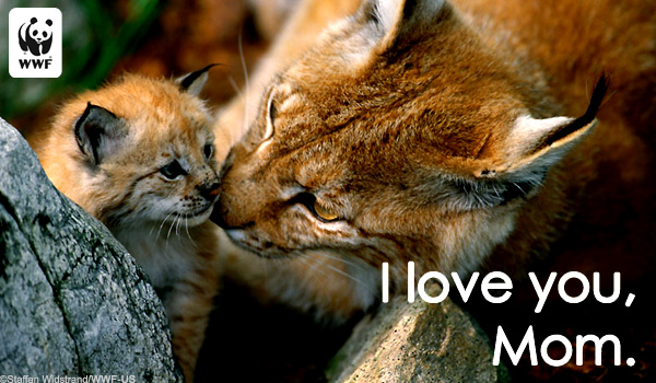 mothers day ecard lynx
