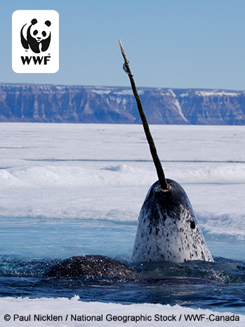 narwhal social photo