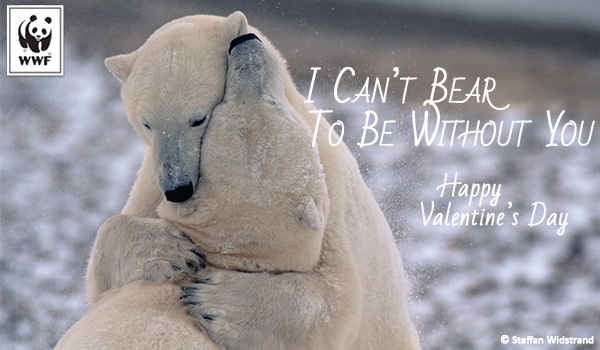 Valentine's Day Polar Bear