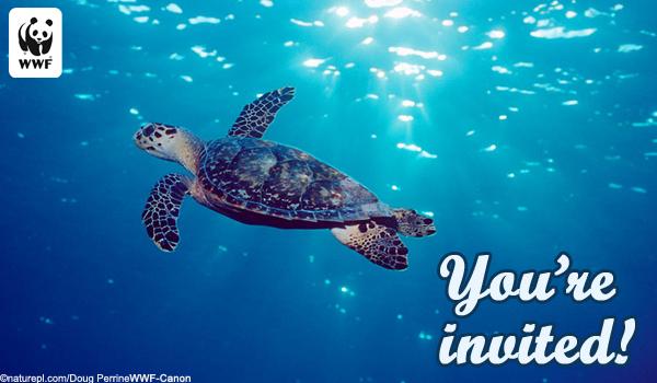 Send invitation and announcement ecards world wildlife fund invite ecard sea turtle filmwisefo