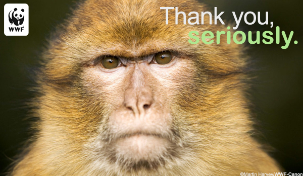 Thanks Ecard Serious Monkey