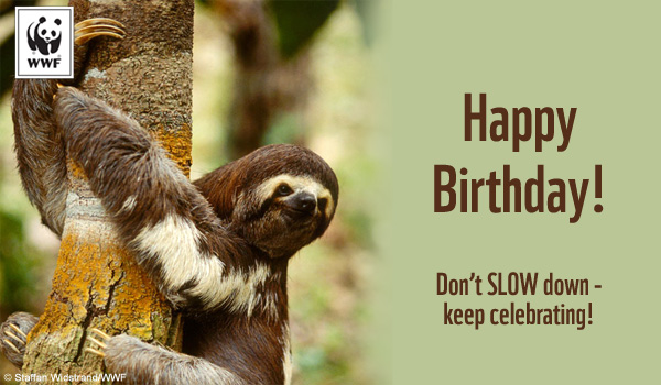 Birthday Ecard Sloth