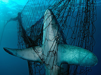 Take a Stand Against Illegal Fishing
