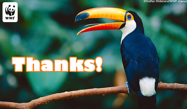 Thanks Ecard Toucan