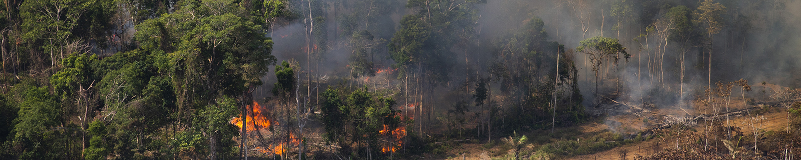 Amazon wildfires