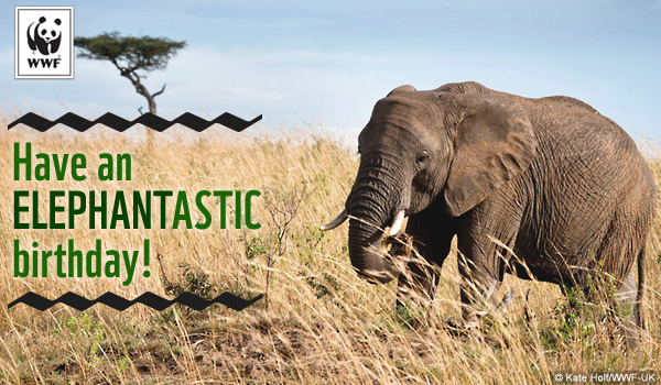 Send free ecards to your friends and family world wildlife fund birthday ecard elephant bookmarktalkfo Choice Image