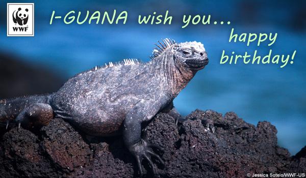 Tremendous Birthday Ecards From Wwf Free Birthday Ecards World Funny Birthday Cards Online Necthendildamsfinfo