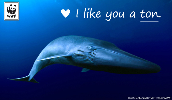 Blue Whale Love Ecard Birthday Ecards