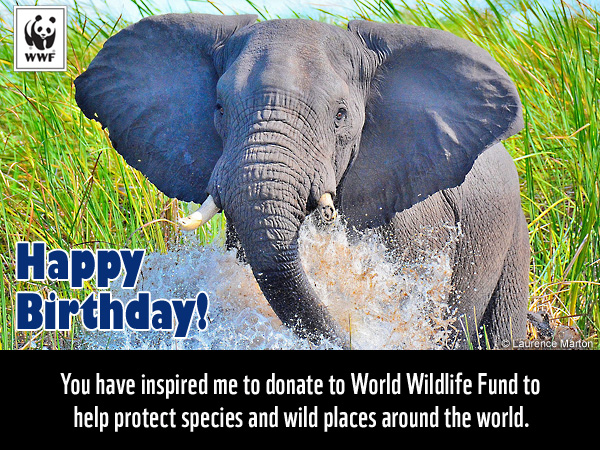 Celebrate A Birthday With Gift For Nature