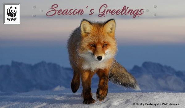 National Wildlife Christmas Cards 2021 Send Holiday Ecards For Christmas Hanukkah And Kwanzaa World Wildlife Fund