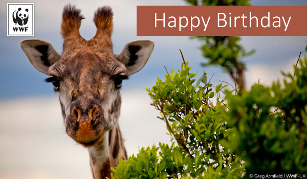 birthday donation ecard giraffe
