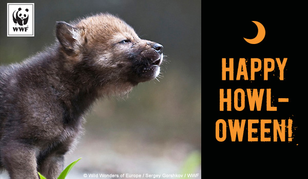 Send free ecards to your friends and family world wildlife fund halloween ecards m4hsunfo