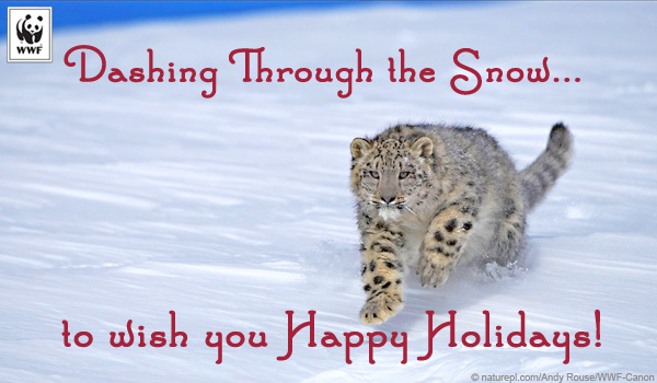 holiday snow leopard ecard