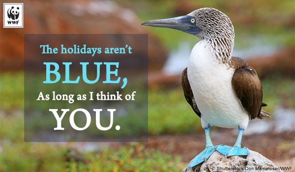 Blue-footed booby holiday ecard