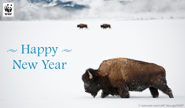 holiday donation ecard bison