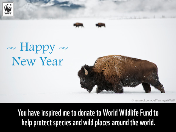 Celebrate the Holidays With a Gift to Nature | World Wildlife Fund