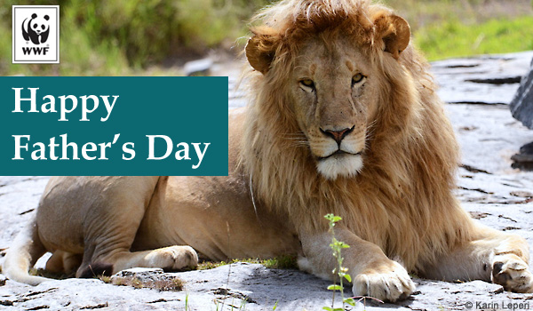 Lion Father's Day ecard