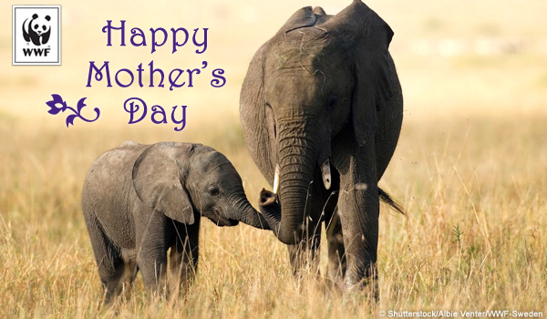 Mother's Day ecard elephant