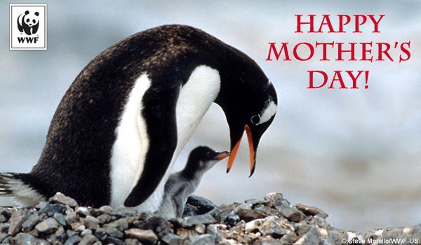 Mother's Day ecard penguins