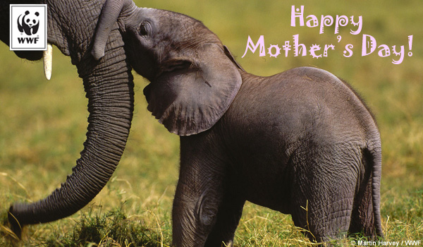 Free Mother's Day ecards