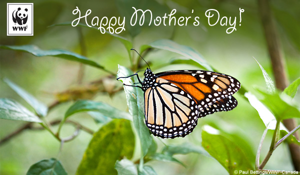 mothers day ecard monarch butterfly