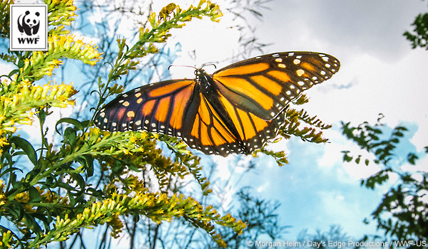 General donation monarch butterfly ecard