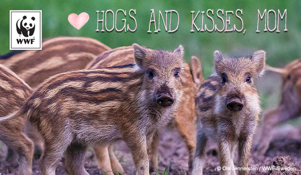 ecard of boars that say hogs and kisses, mom