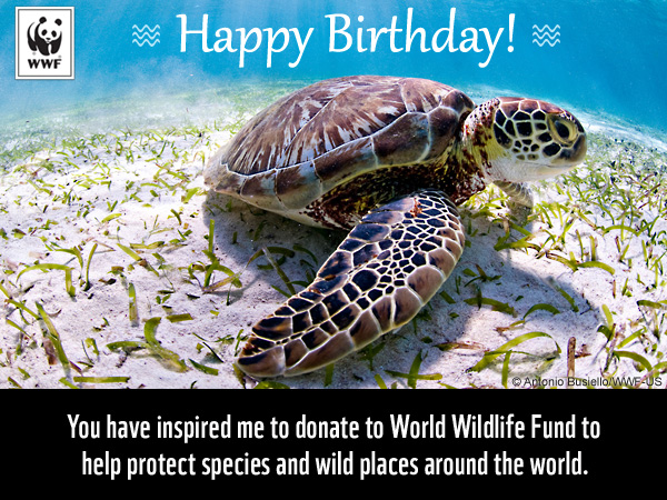 Celebrate A Birthday With A Gift For Nature World Wildlife Fund