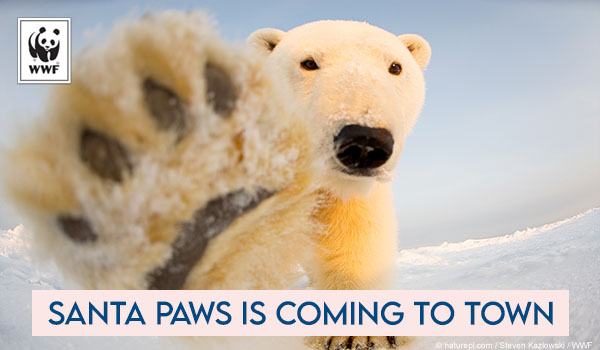 Holiday ecard polar bear that says santa Paws is coming to town