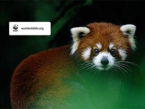 Wwf Calendar Wallpaper Wildlife Desktop Wallpaper Tablet Wallpaper Phone Wallpaper World Wildlife Fund